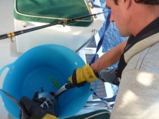 Dispatching the tuna